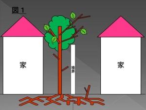 越境(植物)